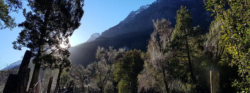 Bosques-Nativos2-960x360